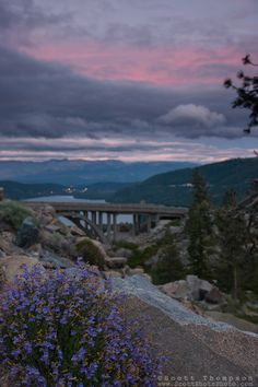 """""""Donner Lake Sunset 17"""" - Photograph of penstemon wildflowers and Rainbow Bridge at sunset above Donner Lake in Truckee, California."""