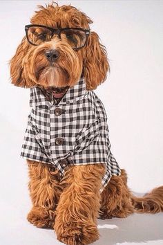 Gingham Button Down | Collared Black & White Checkered Plaid Dog Shirt by Dog Threads