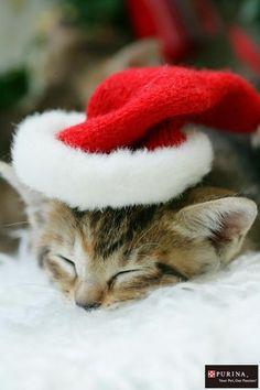 画像D:サンタさんまだかニャ?/猫 ネコ cats  (Nestle PURINA ネスレ日本)
