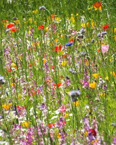 "1,574 Likes, 12 Comments - Petersham Nurseries (@petershamnurseries) on Instagram: ""Transform a patch of your garden into a wild flower meadow. Our School of Garden Inspiration event…"""