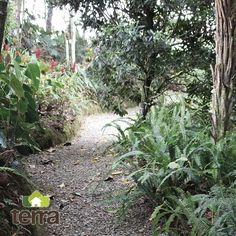 """En Japón le llaman """"Shinrin Yoku"""" que significa baño de bosque. Consiste simplemente  en pasearse en un bosque poniendo atención en todo lo que nos rodea, los olores, los sonidos, el canto de los pájaros. Más que un paseo, es una forma de meditación. Visita nuestra página web www.terra.net.co y pregunta por nuestros servicios en el tel: (4) 3860181"""