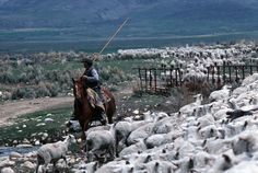 shepherd and sheep herder - Google Search