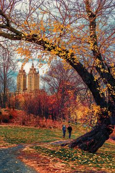 December in Central Park by rmccarthy.photo