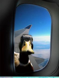 an awkward moment when you realize that someone is staring at 10.000 feet through the window