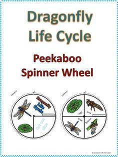 Dragonfly Life Cycle $