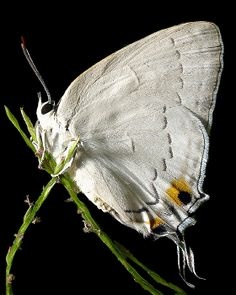 white butterfly- has always represented to me my Mother spiritually...she told me that in her life they remind her of Angels after her mother passed..I will always pass this through in my life time :-)
