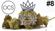 OCS Unboxing Weed Review. Royal High Premium Cannabis Brand from United Greeneries. Super Skunk, Serious Kush & Mazar Great White Shark Mother Plant, The Great White, Earthy, Cannabis, Ontario, Weed, Greenery, Shark, Berries