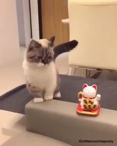 Funny animal videos, funny animal pictures, cool cats, i love cats, crazy Cute Funny Animals, Cute Baby Animals, Funny Cute, Animals Dog, Funny Cat Faces, Funny Bunnies, Super Funny, Hilarious, Cute Kittens