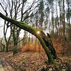 Trekking, Flora, Trunks, Plants, Drift Wood, Tree Trunks, Plant, Hiking, Planets