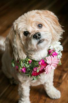 floral collar for wedding dog © Kristina Lynn Photography