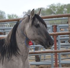 Stallion Ran Wild For 26 Years. And Died 5 Months Into Captivity.