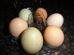 Understanding Egg Labels
