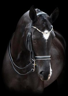 oh. my. goodness I love a black horse