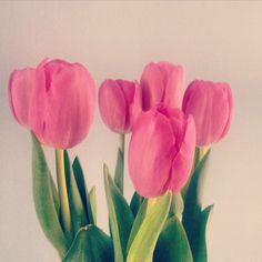 #tulips #flowers #nature #pink #colours #spring Ph. Jessica Vancini