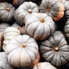 Wondering if all these pumpkins will be on sale tomorrow... #welove #happyhalloween
