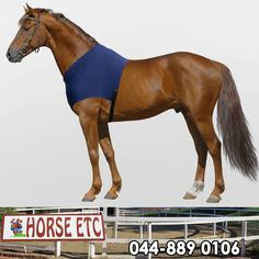 This Mark Todd shoulder guard protects the horse's shoulders from rubbing against turnout and stable blankets. The adjustable elasticated surcingle ensures an easy fit. #lifestyle #equestrainsports #horseriding