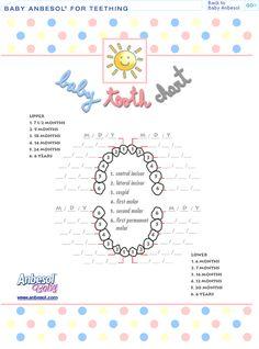 baby tooth chart, printable