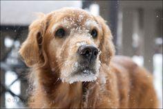 Lucky loved the snow all over his face :(