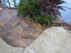 This Pool Deck in Cape Coral, FL is our Job of the week at http://msdcurbing.com/decorative-concrete-cape-coral-fort-myers-fl.html