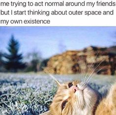 ... This cat even has my self expression! xx #INFJ #Empath #Introvert