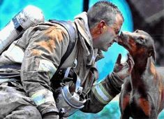 "He had just saved her from a fire in her house, rescuing her by carrying her out of the house into her front yard, while he continued to fight the fire.  She is pregnant.  The firefighter was afraid of her at first, because he had never been around a Doberman before.  When he finally got done putting the fire out, he sat down to catch his breath and rest.  A photographer from the Charlotte, North Carolina newspaper, ""The Observer,"" noticed this red Doberman in the distance looking at the fireman.  He saw her walking straight toward the fireman and wondered what she was going to do.  As he raised his camera, she came up to the tired man who had saved her life and the lives of her babies, and kissed him, just as the photographer snapped this photograph."