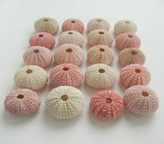 Simple Sea Urchin Shell Place Card Holders - Pink - for your Beach Wedding, Green Wedding, or Eco Friendly Event. As seen in Lucky Magazine.. $17.50, via Etsy.