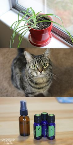 Protect your houseplants from your cat.