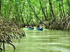 mangroves in Quepos, Costa Rica