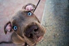 Собаки способны читать по глазам