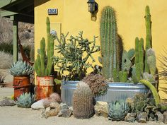 Love the rusty old barrels - a striking cacti garden. Hmm Since we are in AZ this is a great idea to try !!!