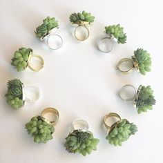 Living jewelry | little succulent rings-- a hip alternative to the corsage. | Neatly designed & displayed, as ever, by Sue McLeary of Passion Flower.
