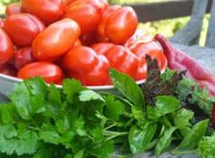 Learn How to Grow Tomatoes for Canning and Cucumbers for Pickling..new article today from growveg.com