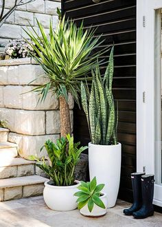 Garden Design Different pots with different plants, various heights of green - Style-savvy renovator Tara Dennis reveals how to turn plain pots into pretty planters - by Jane Parbury Patio Plants, Indoor Plants, House Plants, Plants By The Pool, Plants In Pots, Tall Potted Plants, Potted Succulents, Leafy Plants, Balcony Plants