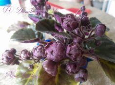 Saintpaulia, African Violet, Gardens, Indoor, Interior, Outdoor Gardens, Garden, House Gardens