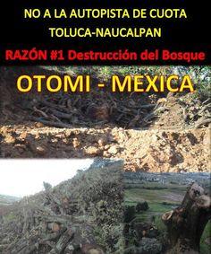 AYOTUXCO: Nuestra lucha es por la vida, permitiremos la destrucción del bosque nahua-otomí