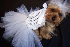 Enzo's bride! LOL