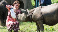 El Parque Nacional Kaziranga, en el noreste de India, es un ejemplo de éxito en cuanto a la conservación de especies en peligro.  El parque nacional donde es legal matar cazadores furtivos para proteger a los rinocerontes. http://www.bbc.com/mundo/noticias-38956919?ocid=socialflow_twitter&post_id=10206356053198357_10211603777988197#_=_