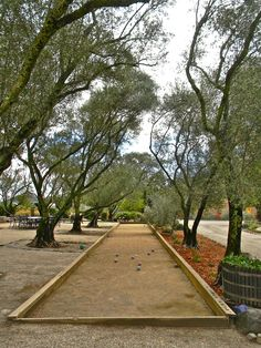 bocce ball court in a 100 year old olive grove