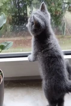 @iloveusmm Funny Cute Cats, Cute Funny Animals, Kittens Cutest, Cats And Kittens, Kitten Gif, Cat Gif, Cute Baby Bunnies, Cute Little Animals, Cat Love