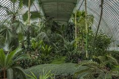 Tropical flowers in the Lednice-Valtice conservatory in the Czech Republic.