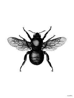 Bi, Bee, Poster/artprints, Vanilla Fly