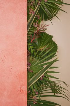 Dreaming of a tropical vacay! Flower Background Wallpaper, Flower Backgrounds, Phone Backgrounds, Wallpaper Backgrounds, Iphone Wallpaper, Aesthetic Backgrounds, Aesthetic Wallpapers, Screen Wallpaper, Plant Wallpaper