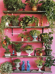 A Garden Wall. A beautiful display of an indoor garden / indoor plants. Plant Wall, Plant Decor, Spring Garden, Home And Garden, Murs Roses, Pot Jardin, Decoration Plante, Pot Plante, Plant Shelves