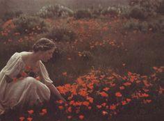 Arnold Genthe. Helen MacGowan Cooke picking California golden poppies in a field. 1906.