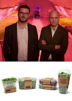 Get behind genius scheme to install subterranean farms under the Northern Line