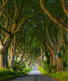 So much of what we do starts with a simple question, 'how much does a trip to Ireland cost? Herb Garden Design, Modern Garden Design, Vegetable Garden Design, Garden Ideas, Dark Hedges Ireland, Landscape Design Small, Small Gardens, Modern Gardens, Dream Vacation Spots