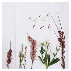 [Il y a des fleurs partout pour qui veut bien les voir.] Henri Matisse