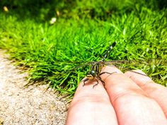 #close up #color #daylight #depth of field #ecology #environment #field #fingers #garden #grass #green #hand #insect #lawn #leaf #little #macro #outdoors #park #summer #wild #wings