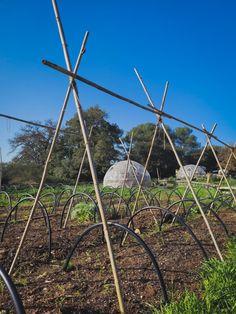 Chez Carotte et Cocotte, on a opté pour la canne de provence à ficelles ! Provence, Wind Turbine, Twine, Dutch Oven, Aix En Provence