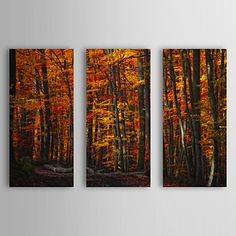 Stretched Canvas Art Botanical Forest Density by Philippe Sainte-Laudy Set of 3 – USD $ 69.99